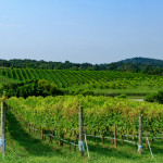 Barrel-Oak-Winery-Field